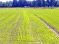Parco delle risaie_14